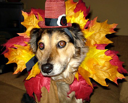 Thanksgiving Scout2